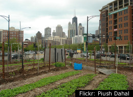 Chicago Paves Way for Commercial Scale Urban Farms