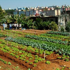 Favela Farming